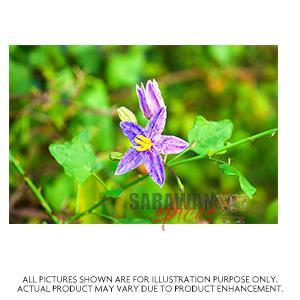 Thoodu Vali Plant